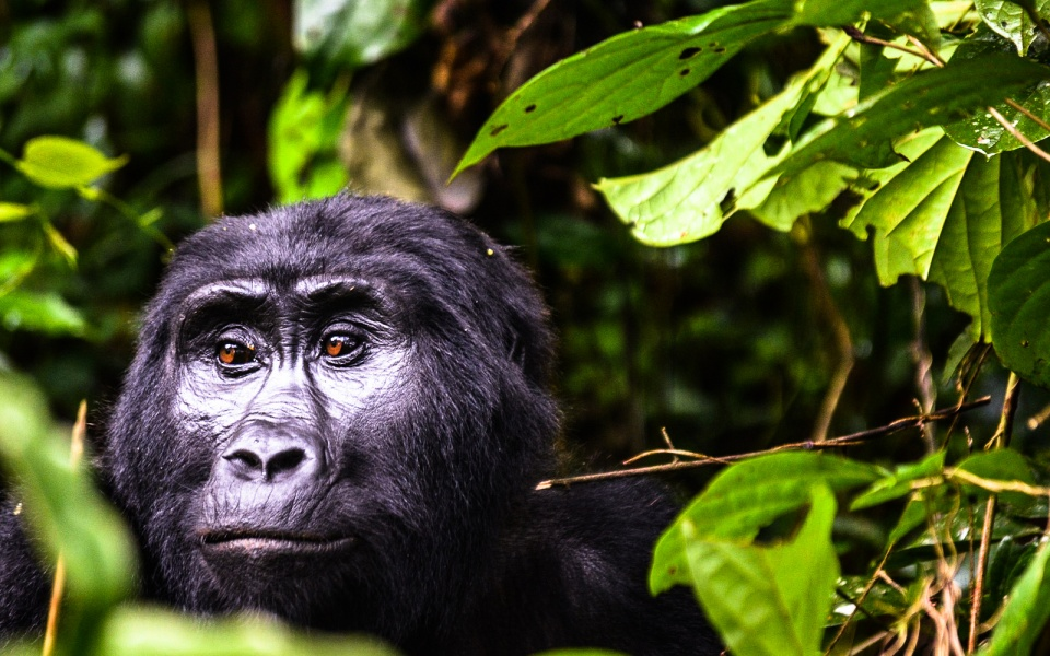 Viaje a Uganda y Rwanda: Gorila Trek - Club Marco Polo